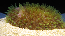 Corals Clash on the Ocean Floor