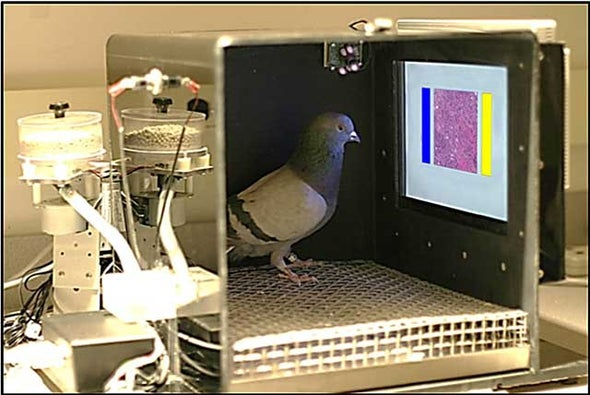 Pigeons Tend to Land on the Right Spot When Looking for Breast Cancer