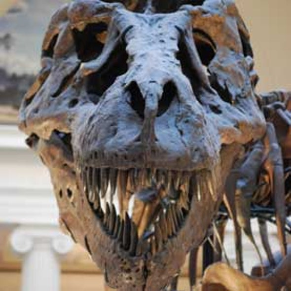 New Tyrannosaur Discoveries Reveal Details about <i>T. rex</i> [Slide Show]