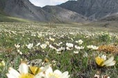 The Fight over the Arctic National Wildlife Refuge Is Back