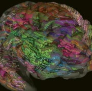 Where Words are Stored: The Brain's Meaning Map