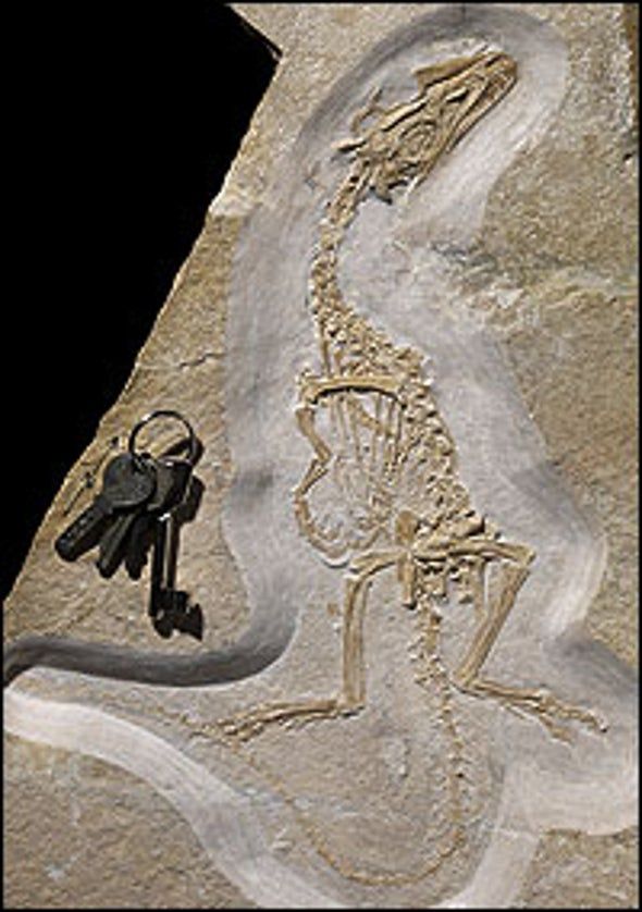 Scaly Dino Find Complicates Feather Evolution