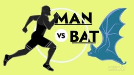 An Olympic Showdown: Human versus Bat