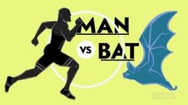 An Olympic Showdown: Human versus Bat