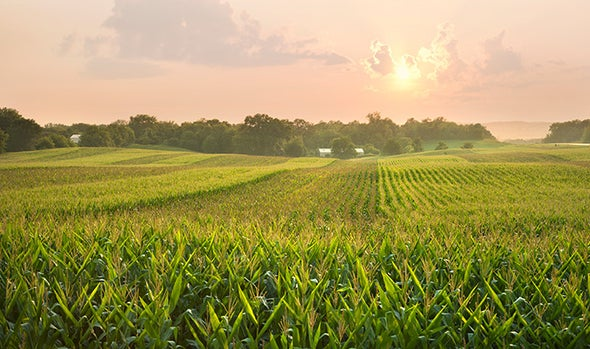 Climate Change Brews Perfect Storm of Food Woes