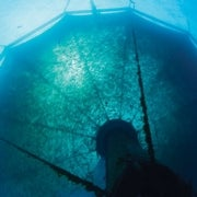 The Blue Food Revolution: Making Aquaculture a Sustainable Food Source