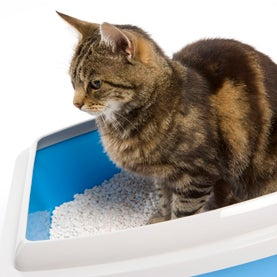 cat, cat litter, environmentally friendly cat litter