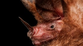 Physics Technique Reveals Hidden Bugs to Bats