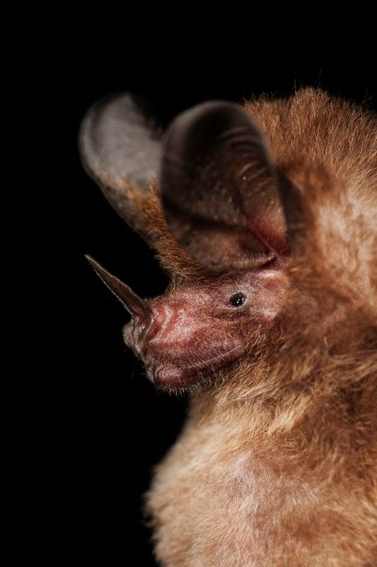 Physics Technique Reveals Hidden Bugs to Bats