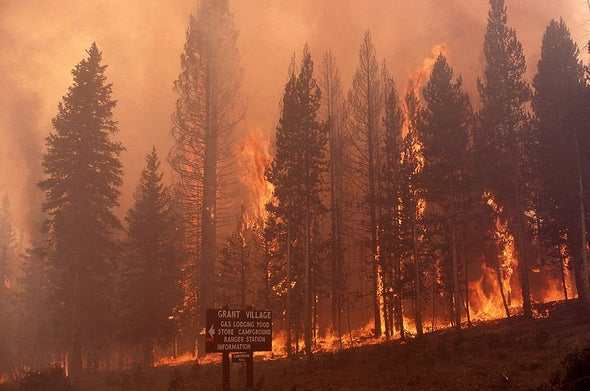 Yellowstone Rebounded from an Epic 1988 Fire—That May Be Harder in Future