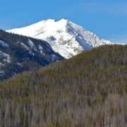 How a Computer Modeler Predicted the Mountain Pine Beetle Tree-Killing Rampage