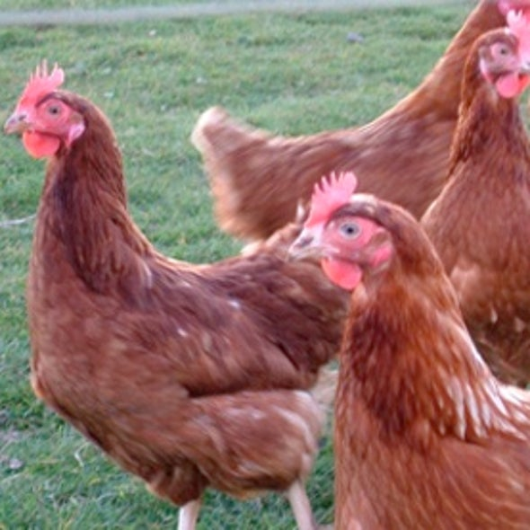 Experts Weigh In on Bird Flu Research