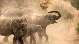 Squeezing the Elephant