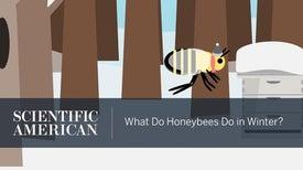 为了御寒,蜜蜂拥抱