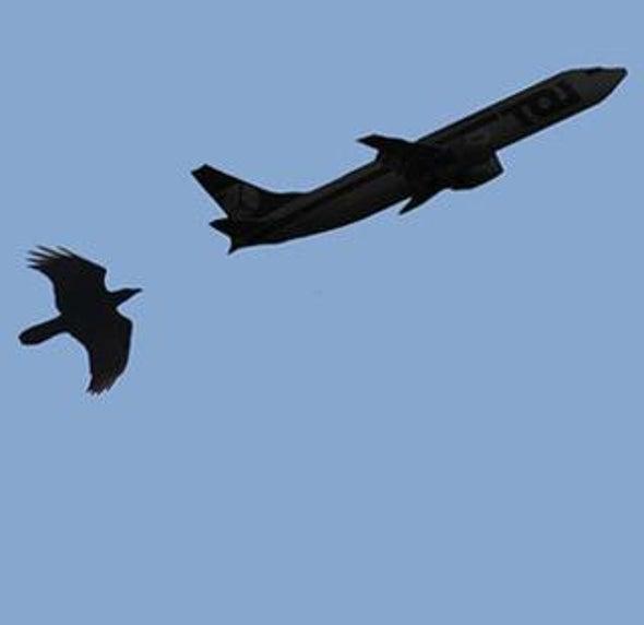 Birds and Planes: Strike Zone