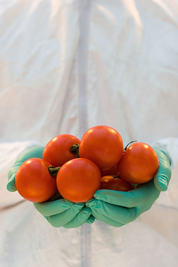 Gene-Modified Tomatoes Churn Out Healthy Nutrients