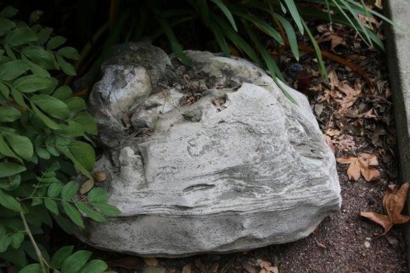 Rare Whale Skull Fossil Found at California School