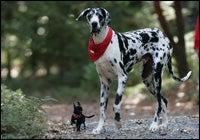 big dog and small dog