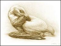 Sleeping Dino Assumed Birdlike Pose