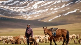 Could Dogs Help Save the Mongolian Steppe?