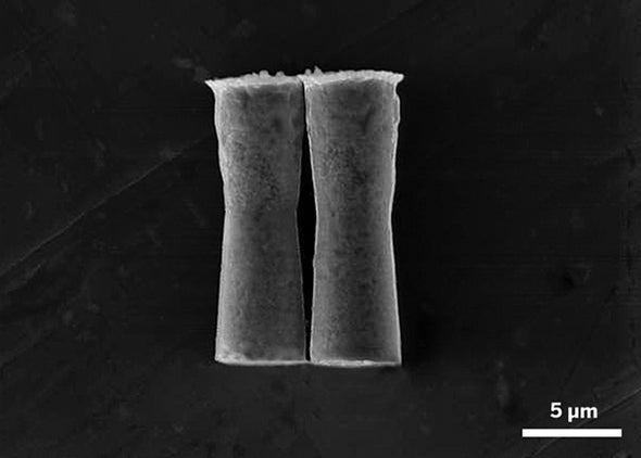 Self-Propelled Micromotors Take Their First Swim in the Body