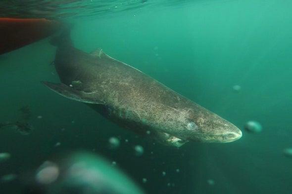 This Shark Is the Vertebrate Methuselah