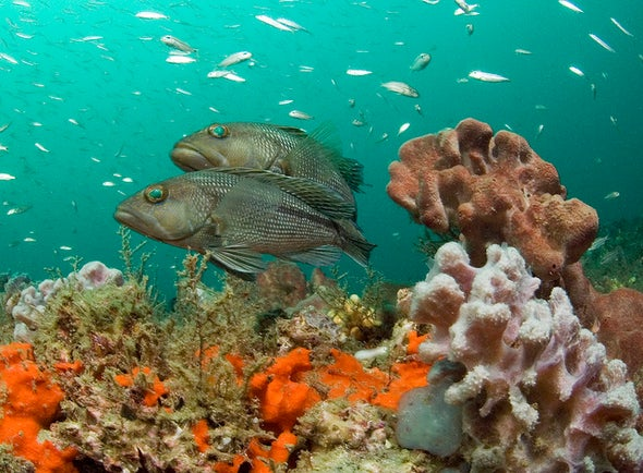 Overfishing and Pollution Kill More Corals than Climate Change