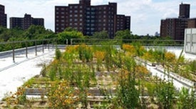 Why Manhattan's Green Roofs Don't Work--and How to Fix Them