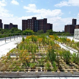 manhattan green roof, green roof, rooftop gardening