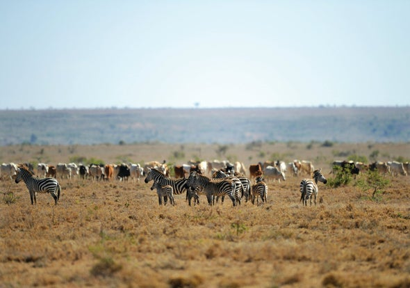 Livestock Act Like Ghosts of Wildlife Past