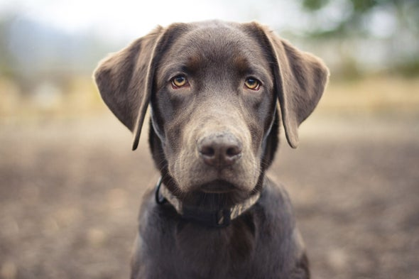 Dog Intelligence and What It Can Tell Us about Our Own Intelligence