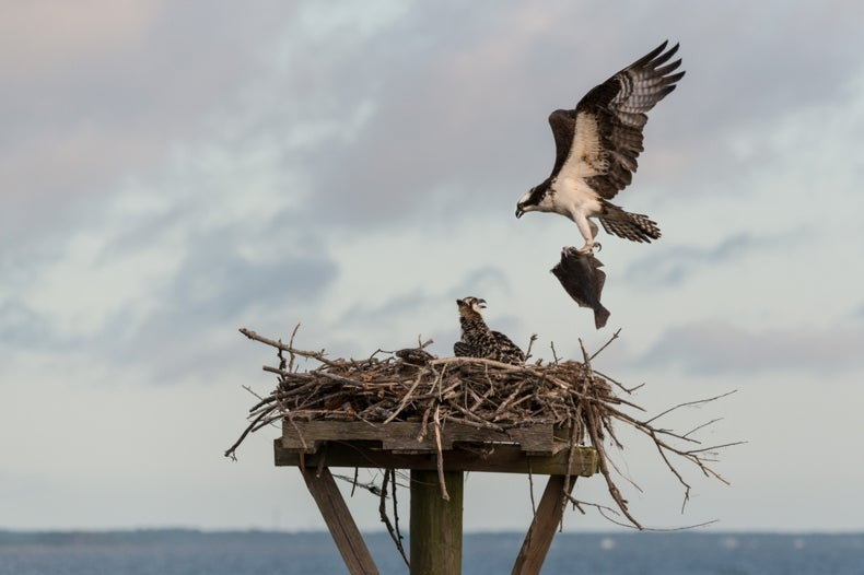 Uncivil War Breaks Out Over Fluke as Habitat Shifts North