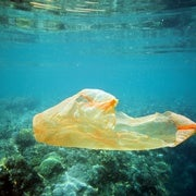 Where Plastic Goes, Coral Disease Follows