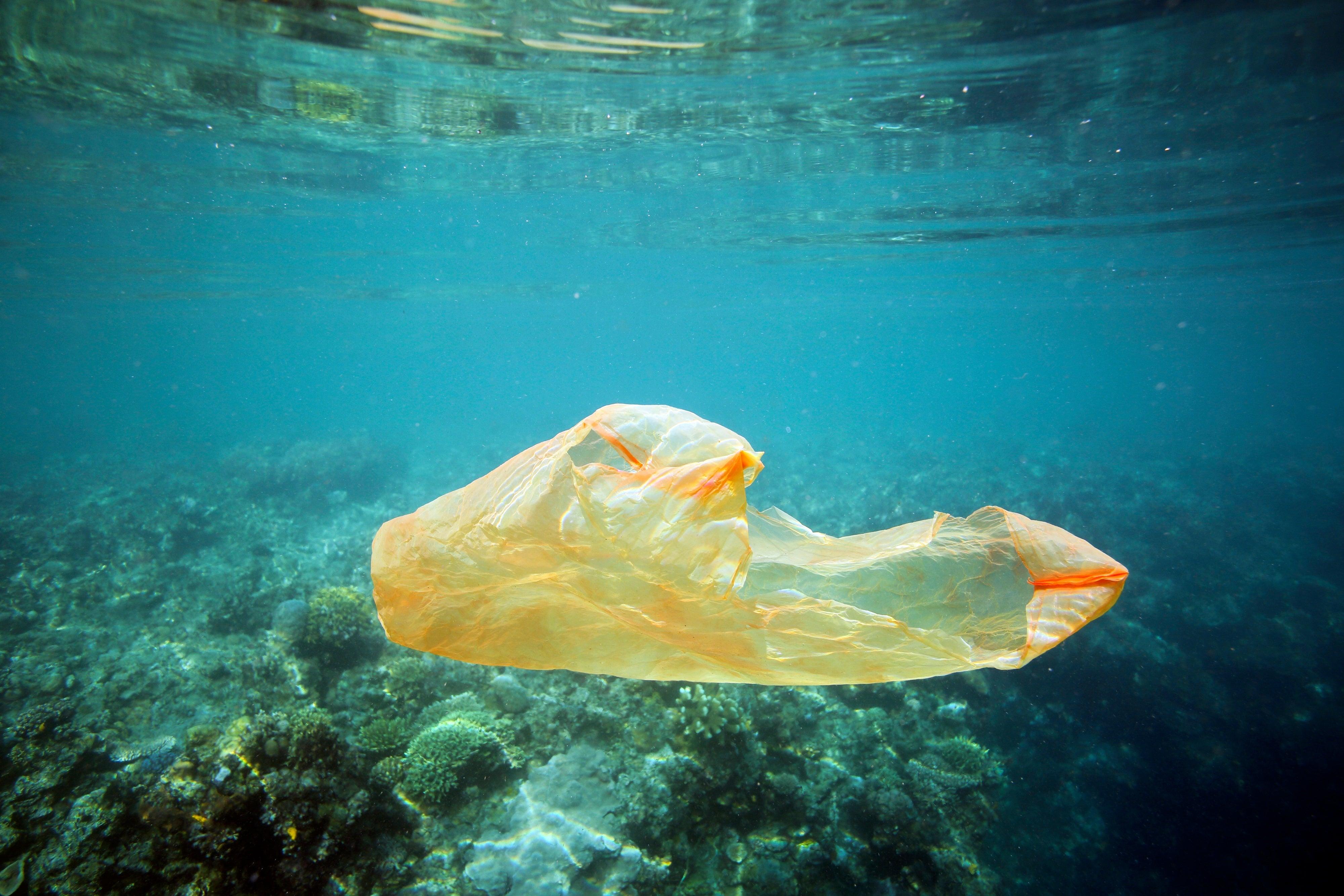 Where Plastic Goes, Coral Disease Follows - Scientific American