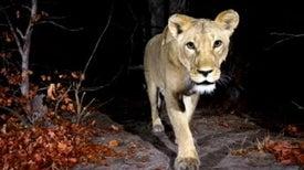 Africa's Most Elusive Animals Caught on Camera