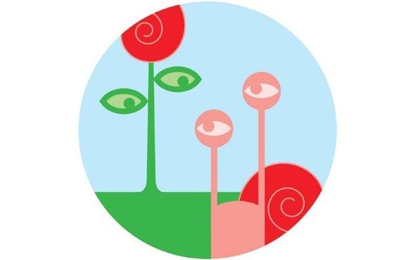"""Plants """"Eavesdrop"""" on Slimy Snails"""