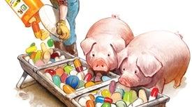 Curb Antibiotic Use in Farm Animals