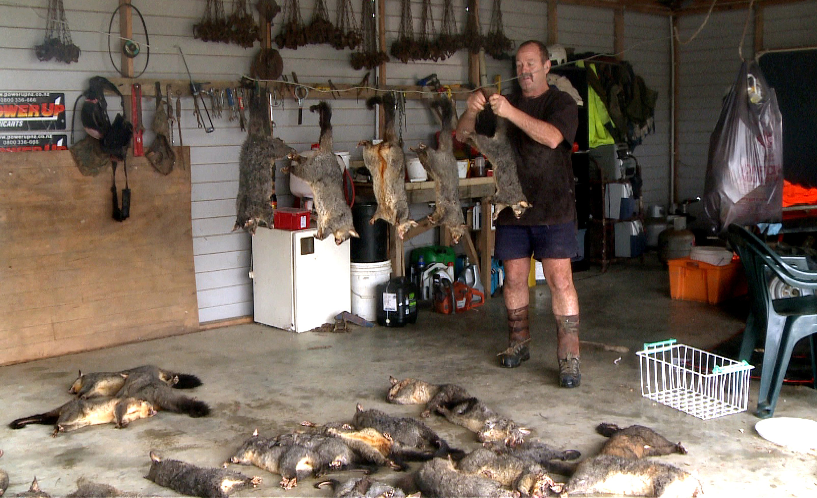 How To Get Rid Of A Possum In Your Garage behind new zealand's wild plan to purge all pests