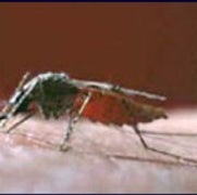 New Approach to Containing West Nile Virus