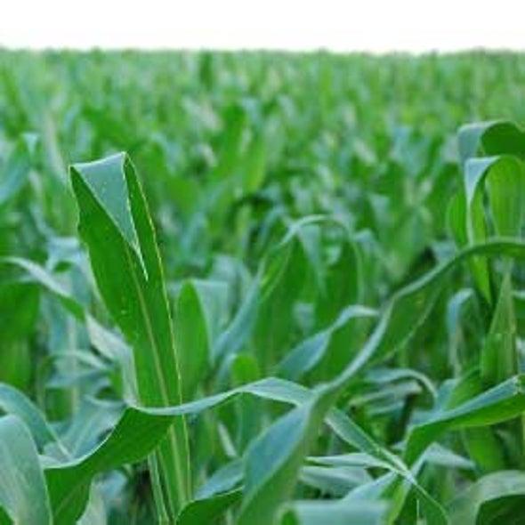 Rising Use of Corn Ethanol Stresses Midwestern Aquifers