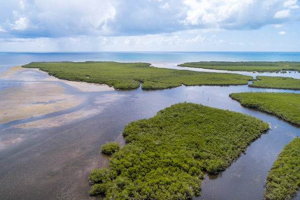 Enlist the Ocean in Combatting Climate Change, Experts and Advocates Argue
