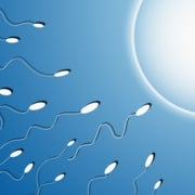 Obese Dad's Sperm May Influence Offspring's Weight