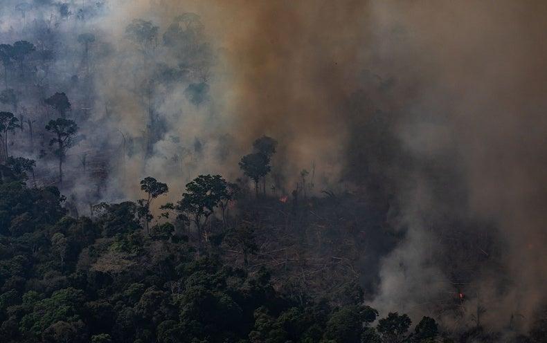 Destructive Amazon Fires Do Not Threaten Earth's Oxygen, Expert Says
