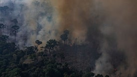 Destructive Amazon Fires Do Not Threaten Earth's Oxygen, Expert Says