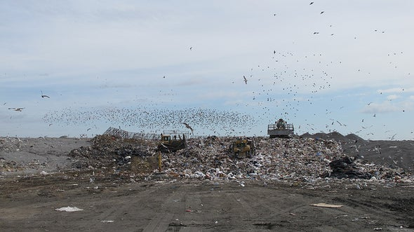 Health Threat May Keep Incinerators from Turning Trash to Power