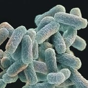 Engineered Microbe Shakes Up the Tree of Life
