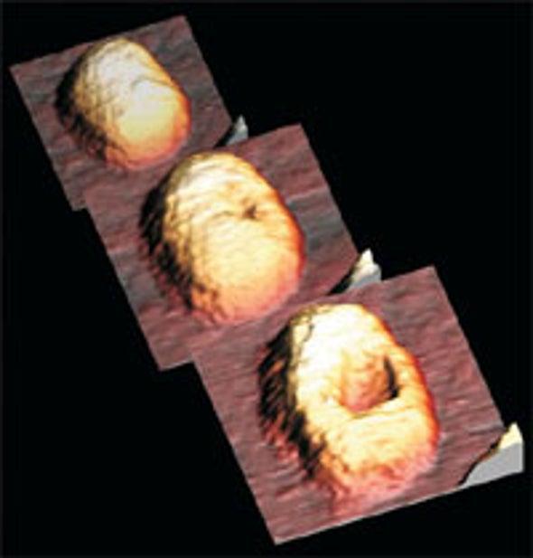 Elastic Virus Shells Could Inspire Nanosized Vessels