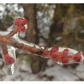 In the iMoment: Spring Captured: Freezing rain attempts to halt spring
