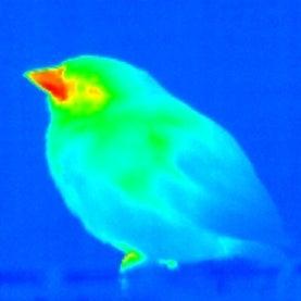 Beak Heat: Evolutionary Theory of Bird Bills May Need Revision