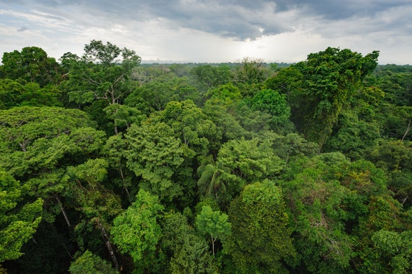 Indigenous Amazon Communities Fight Deforestation with New Early-Alert Tool